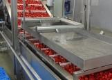 RU Delta Fros strawberries